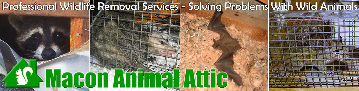 Macon Animal Attic